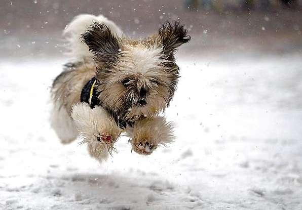 Januarhunde