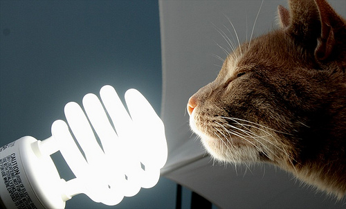 Lampenkatzen
